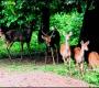 एक दुनिया जंगल की:सिमलीपाल नेशनल पार्क