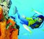 सिंधुदुर्ग आइए: समुद्र में गोता लगाने