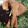 केन्या: असली जंगल की सफारी का रोमांच