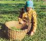 पालमपुर : हिमाचल का चाय बागान