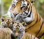 जिम कार्बेट  नेशनल पार्क रामनगर