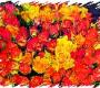 कहीं फूलों का जलसा कहीं नावों का