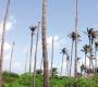 लक्षद्वीप: सागर में सिमटा सौंदर्य