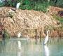 पक्षियों के कलरव से गुलजार घना पार्क