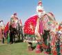जयपुर में फागुन की मस्ती और हाथियों का उत्सव