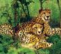 प्रकृति के वैभव का देश है दक्षिण अफ्रीका