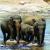 हाथी, श्रीलंका का साथी